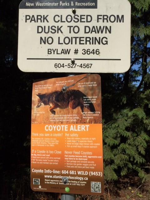 Vancouver Coyote 1 August 2019